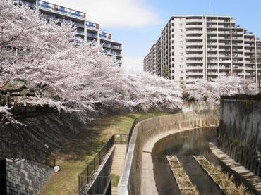 加賀橋より上流を望む