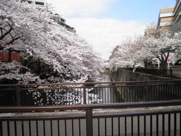 加賀学園橋から上流を望む