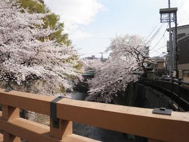 板橋より下流を望む  4月1日  大塚和比古