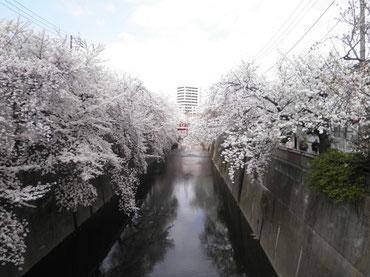 板橋区・久保田橋より上流を望む