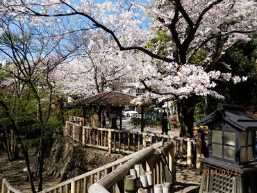 北区音無親水公園  舟串橋より  3月31日