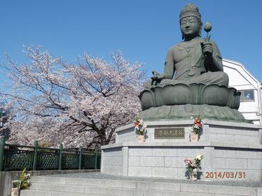 北区谷津大観音と桜  3月31日  馬耳南風