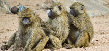 Photo: Filipa Paciencia, German Primate Center