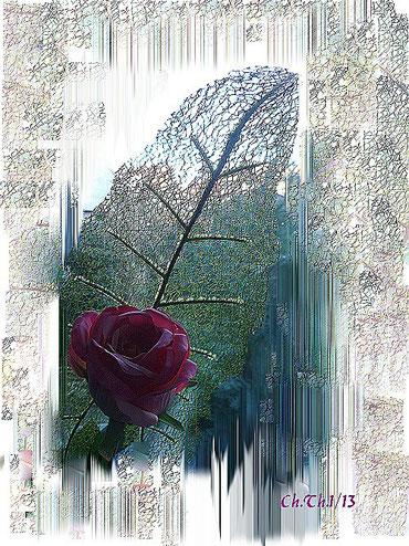 eine Rose ist eine  Rose ist eine Rose....