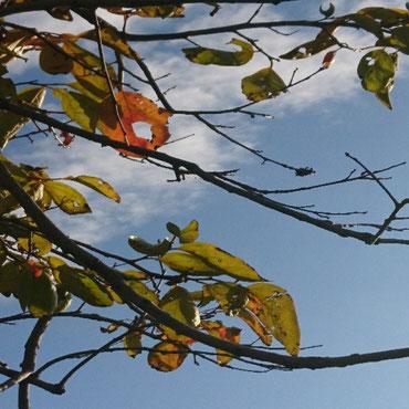 美味しいね 虫食いの 赤く染まった 葉っぱかな🍁