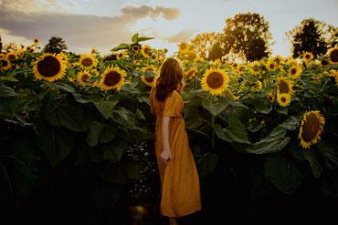 Sonnenblumenfeld – (c)Karolin Gillert