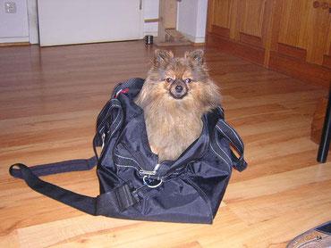 oh toll, ab in die Tasche - wohin trägst Du mich, Frauchen? in die Sonne? auf eine schöne Wiese? wuff wuff wuff