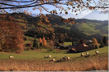 Goldiwil - Heiligenschwendi - Ringoldswil - 09.11.2011