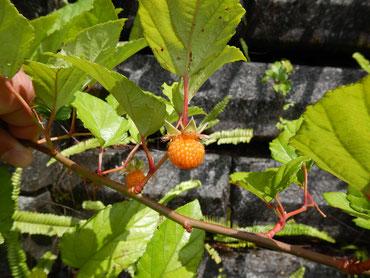 季節によって、違った植物と出会えます。