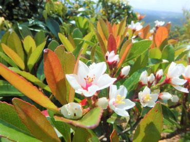 緑を彩る素敵な花たち