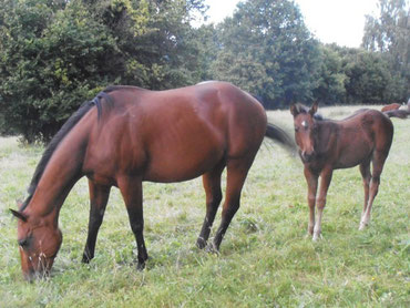 Jaqueline Quarter-Horse