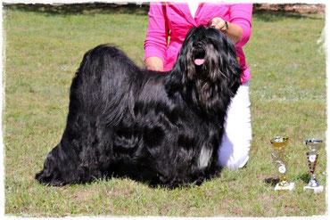 BOB Tibet Terrier Man-Dara-Wa Phu-Pacificus