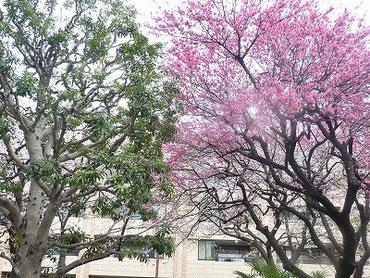 こちらのピンクの花は桃でした(^^♪