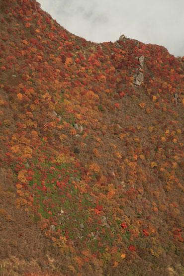 大鍋斜面の紅葉