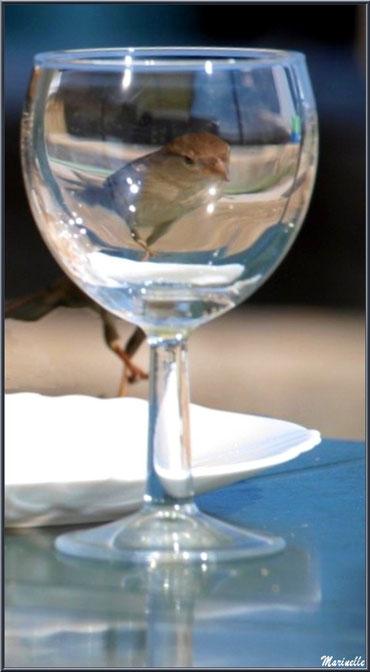Moineau dans un verre