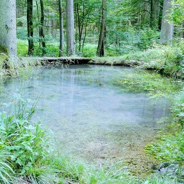 Im Wald finden viele Menschen Ruhe.