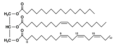 Structure of triglyceride (example)