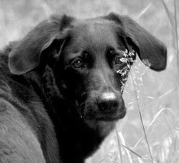 Ruhe in Frieden, Du bleibst für immer in meinem Herzen, mein geliebtes Hundemädchen <3