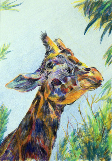 Т. Казакова. Жираф-длинношейка, цв. карандаши
