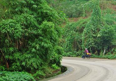 Ab Chengdu sehen wir viel Bambus.