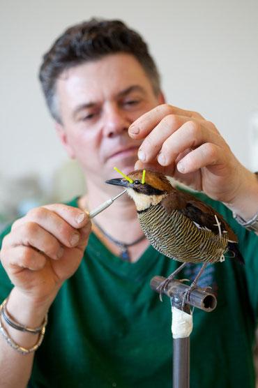 Der Präparator Bianchi einen Vogel fertigen