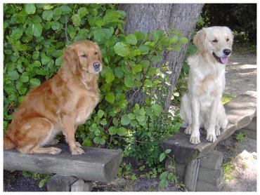 Zwei  Hunde sitzen an einem Baum.