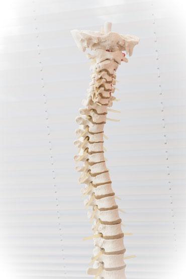 Rückenschmerzen, Psychosomatik, Organsprache, Übertragungsschmerzen, HeilRaum Corinna Stübiger,