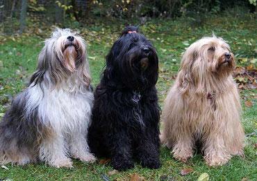 Milka, Kar-mi und Bya-ra