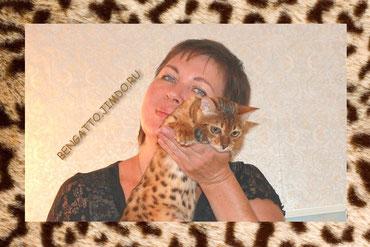 питомник кошек бенгальской породы Bengatto
