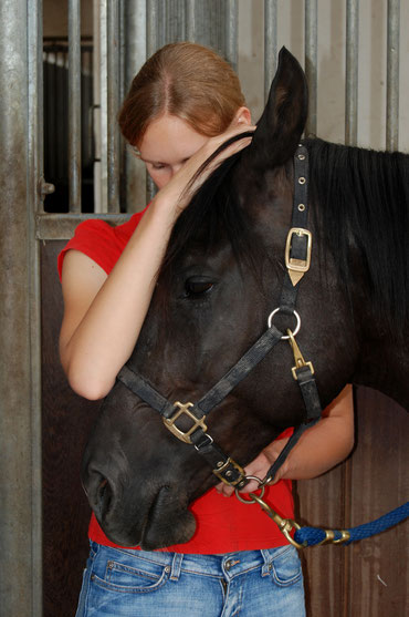 Physiotherapeutische Leistungen (Pferde & Hunde) von Tierärztin Caren Seel