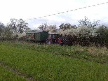 Wanderung des Bienenwagens mit dem Trecker eines Freundes