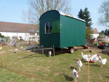 Unsere Hühner vor ihrem Mobilstall