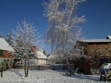 Blick auf den Ökohof Fläming in Schopsdorf. Auf den Bäumen hat sich der Schnee gesammelt, an den Dächern bilden sich Eiszapfen. Der Bienen sind in Winterruhe, die Menschen genießen unterdessen den Honig im Tee.