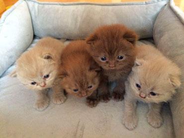 die kleinen Kätzchen, unsere zwei Kater sind auch dabei