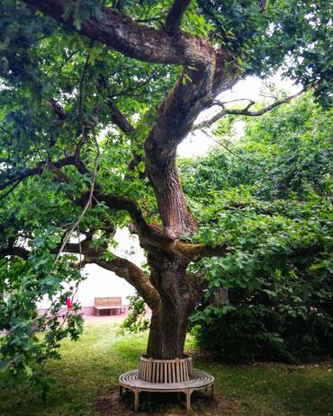 Der Baum im Zentrum der Akademie Gesundes Leben, bei der ich gelernt habe, wie ich Kurse für Glück, Zufriedenheit und Wohlbefinden gebe.