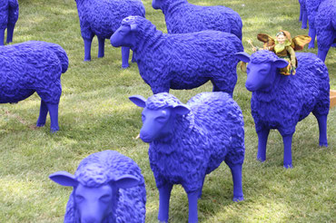 Als schwarzes Schaf hält man es nur Blau aus.