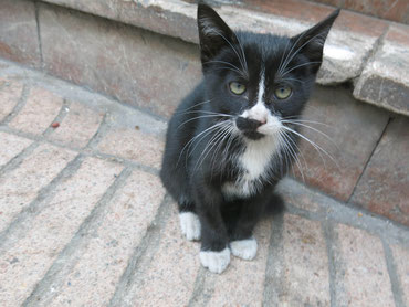 Streunende Katzen findet man in Casablanca an jeder Ecke