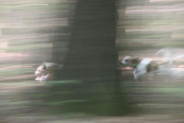 Oftmals waren wir viel zu schnell für Frauchen und ihre Kamera! (Ronja & Kabou)