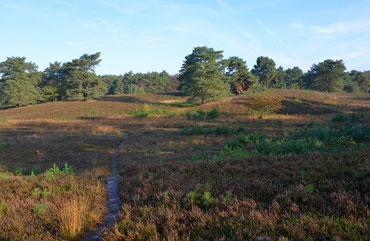 Naturschutzgebiet Wolfsgrund.................................................                      Foto © J. Looks