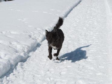 Hund auf dem Weg von Zürs nach Lech