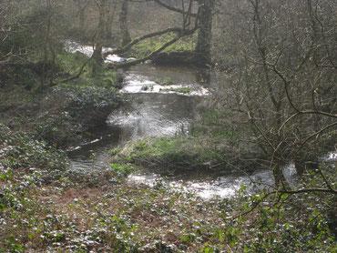 Sur les rives du ruisseau de Meil Gledig vit au moins une loutre.