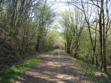 Retour par la Voie Verte, ancienne voie ferrée du Réseau Breton