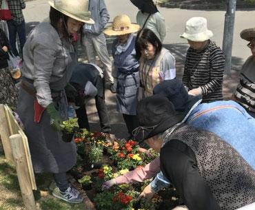 夏花壇の実習(デザイン、計画、施工、メンテナンスまで)