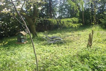 Die Sonnenwiese im Garten