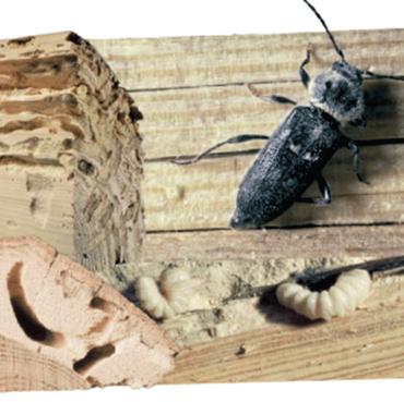 Traitement insecticide et fongicide Protection du bois