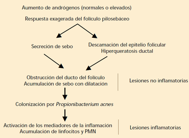 Patogenia del acne