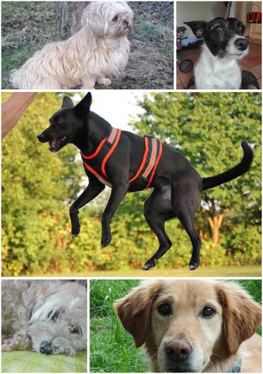 An diesem schönen Tag waren unsere Therapiehunde Gini, Bibi, Moni, Yks und Milla mit dabei.
