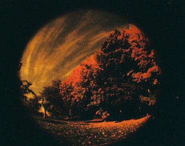 Herbst: typisch für Herbstbilder: Bäume. ;-) Aufgenommen mit der Baby-Fisheye.