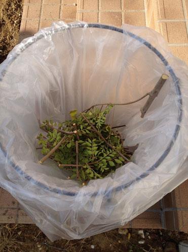 名古屋市の場合剪定ゴミはどうやって捨てる?