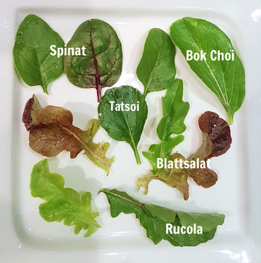 Saisonale Salatmischung Frühling und Herbst